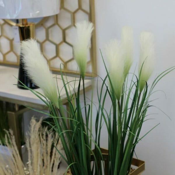 plante plume